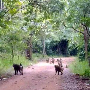 shai hills resource reserve ghana tour